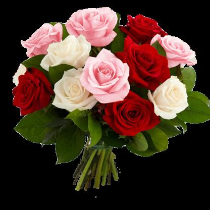 Eleganta Rosa-Vita-Roda-Rosor