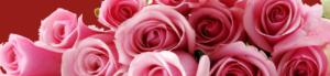 Background_rosor