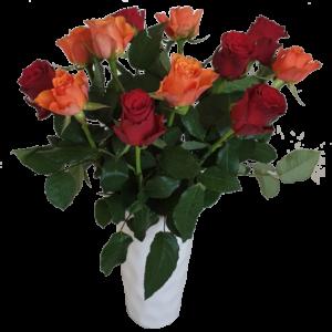 Vackra orange o röda rosor