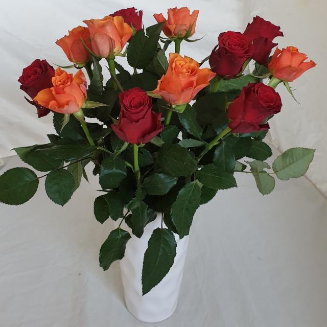 red_orange_roses