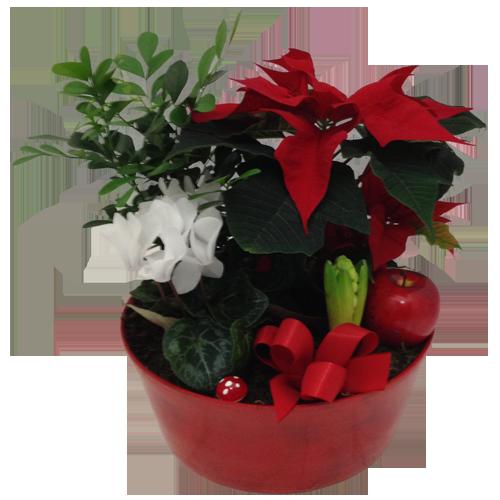 julgrupp-röd-julstjärna