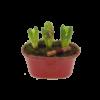 söta-tre-hyacinter-i-ett-skål