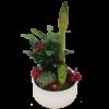 vacker-amaryllis-julgrupp-vitt-skål