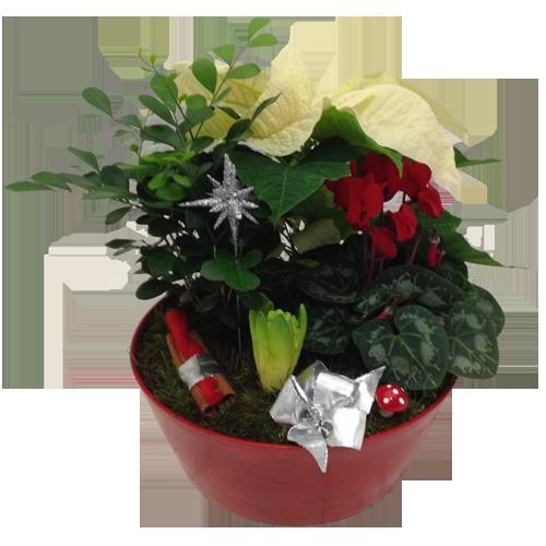 vacker-julgrupp-vit-julstjärna