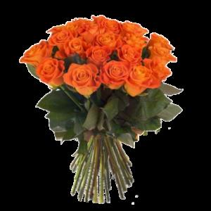Vackra orange rosor